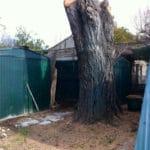 Abattage d'un saule sec et délicat entre deux abris de jardin et une volière – Utilisation d'une nacelle