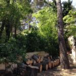 Abattage d'un pin à proximité de lignes électriques à Velaux (Bouches du Rhône)